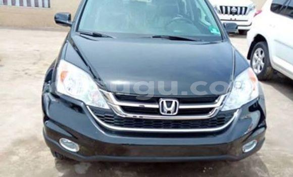 Buy Used Honda CR–V Other Car in Ouagadougou in Burkina Faso